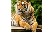 Welsh Mountain Zoo - National Zoo of Wales, Colwyn Bay